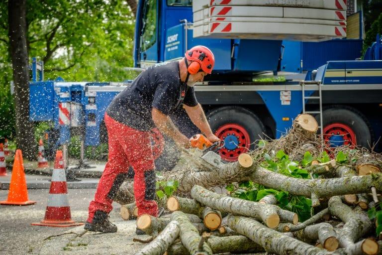 Boomverzorging Alkmaar